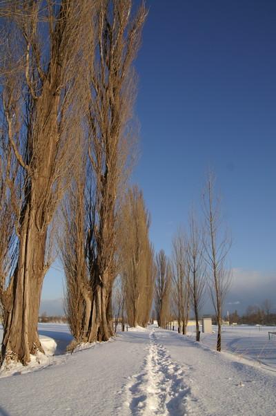 2010年 冬から春へ 北大キャンパス_c0219616_10324530.jpg
