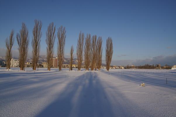 2010年 冬から春へ 北大キャンパス_c0219616_1033168.jpg