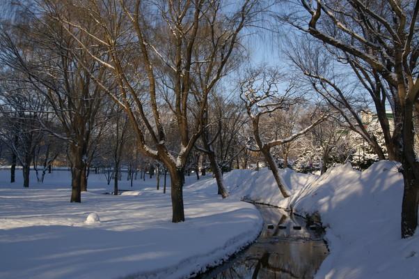 2010年 冬から春へ 北大キャンパス_c0219616_1034721.jpg
