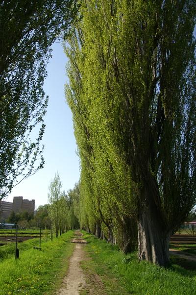 2010年 冬から春へ 北大キャンパス_c0219616_10352739.jpg