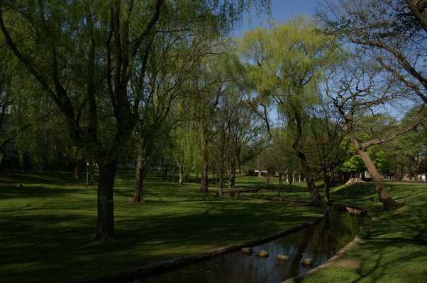 2010年 冬から春へ 北大キャンパス_c0219616_1038171.jpg