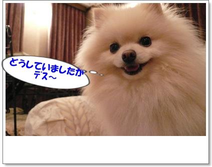 b0167519_855335.jpg