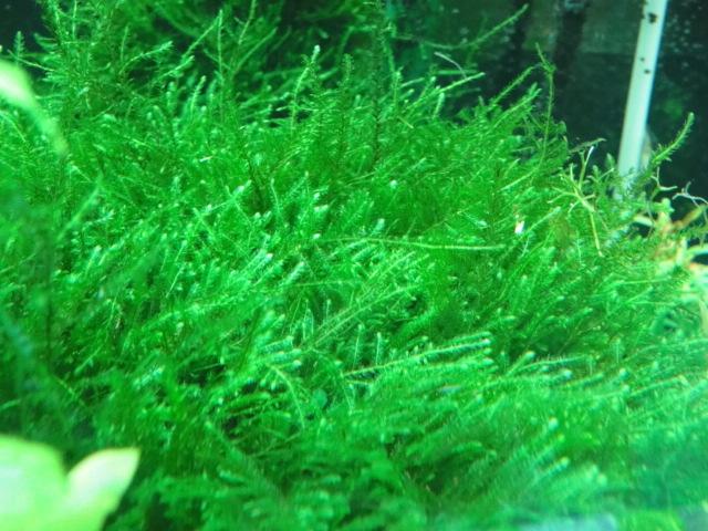水草・淡水魚_f0189122_1522352.jpg