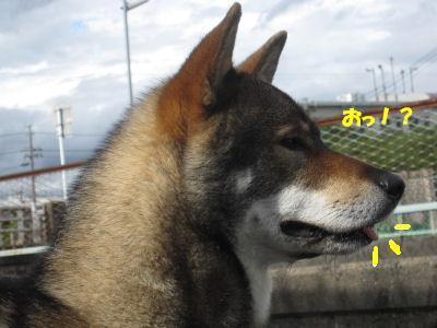 f0143123_2012897.jpg