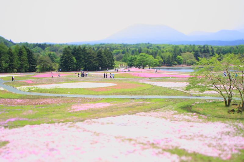 休日 富士へ_f0105425_1375461.jpg