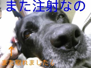 ドロ_f0148927_1922346.jpg