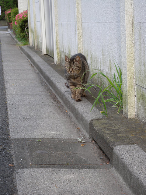 歩いてた猫_e0089232_18371272.jpg