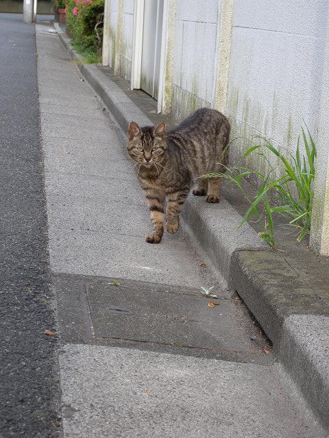 歩いてた猫_e0089232_1837181.jpg