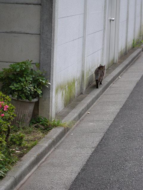 歩いてた猫_e0089232_1837685.jpg