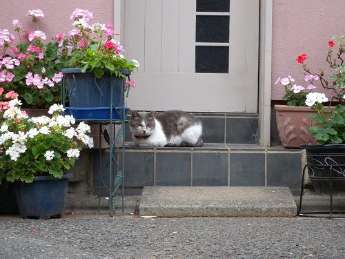 花に囲まれて_e0089232_1838525.jpg