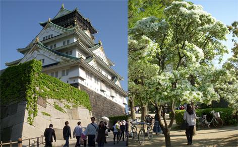 大阪の旅_f0045132_1732015.jpg