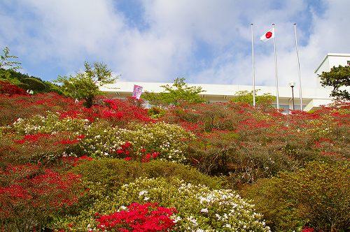 ツツジの花・・・晩春の箱根の旅(6)_d0043136_1559391.jpg