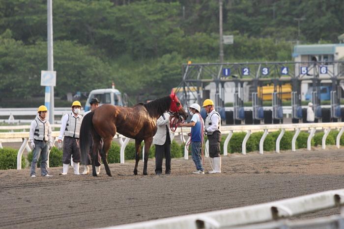 2010年5月21日(金) 高知競馬 5R C2ロ その2_a0077663_17244622.jpg