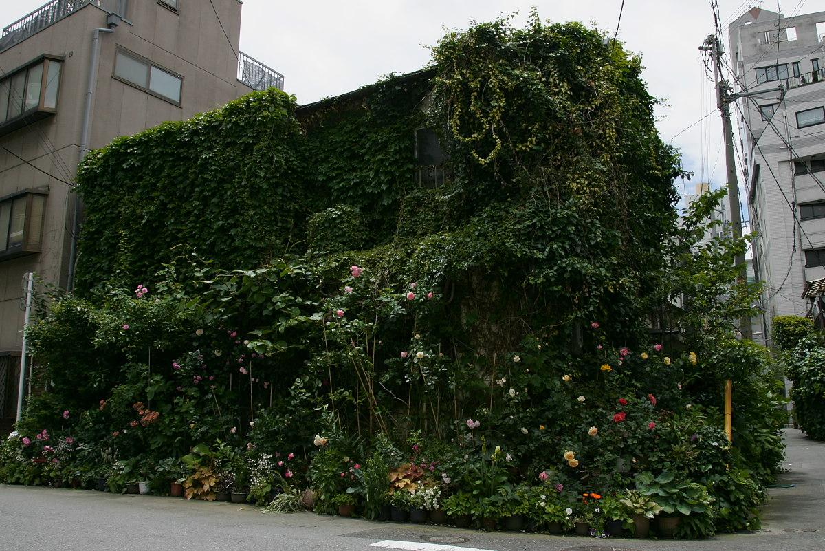 薔薇House_f0021869_2128823.jpg
