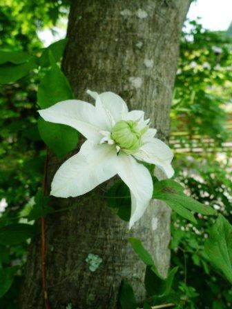 花盛り。_f0177373_2005723.jpg