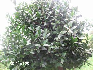 f0053885_20101143.jpg