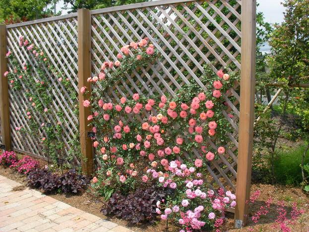花菜ガーデン_d0164691_1847453.jpg
