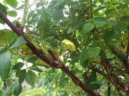 ほぼ 無農薬で育てるバラ_e0187897_21203796.jpg