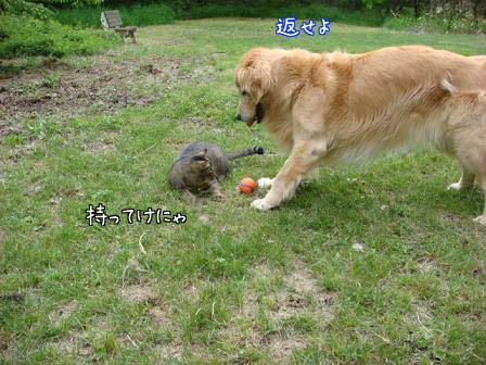 ボール遊びは3ラウンド?_f0064906_20412778.jpg