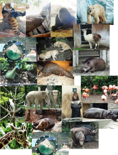 上野動物園_f0153418_17205160.jpg