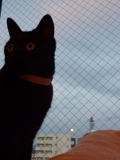 灯ともし頃猫 のぇる編。_a0143140_21292219.jpg