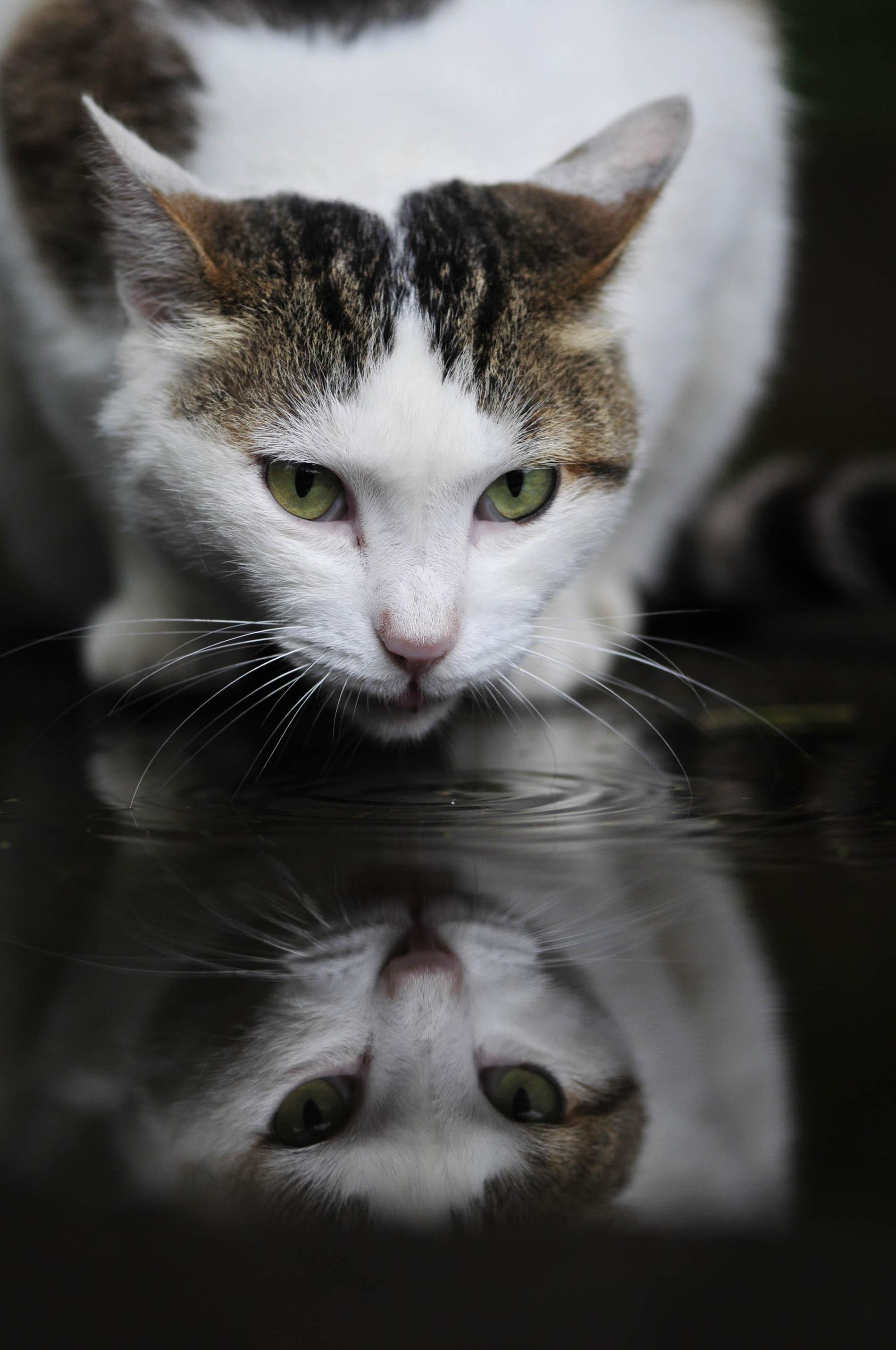 猫さんって、、、_e0157647_236134.jpg