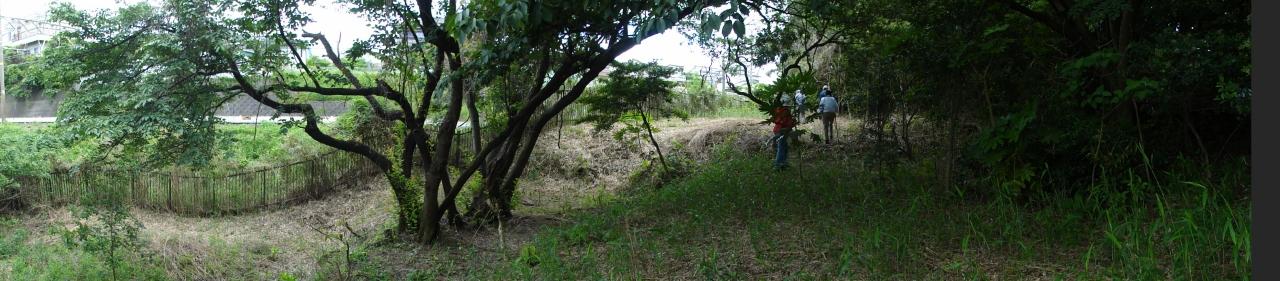 うみべの森を育てる会5月度植物調査_c0108460_21354126.jpg