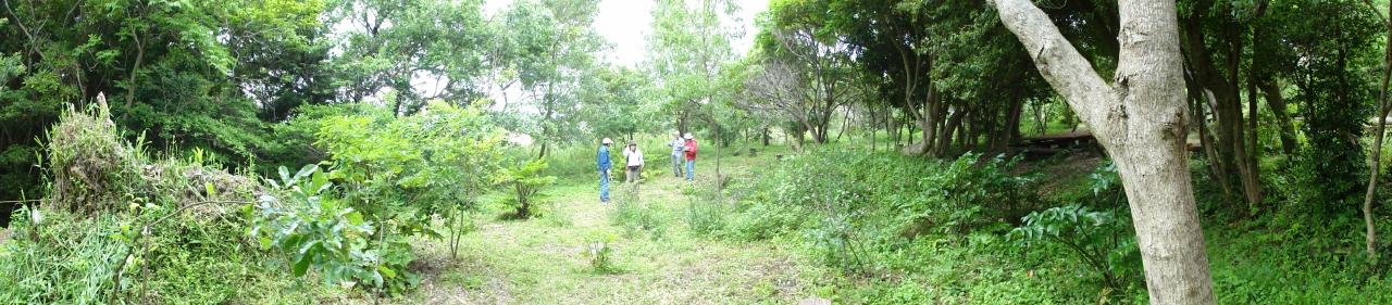 うみべの森を育てる会5月度植物調査_c0108460_21363444.jpg