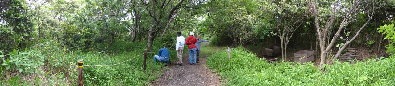 うみべの森を育てる会5月度植物調査_c0108460_2137161.jpg