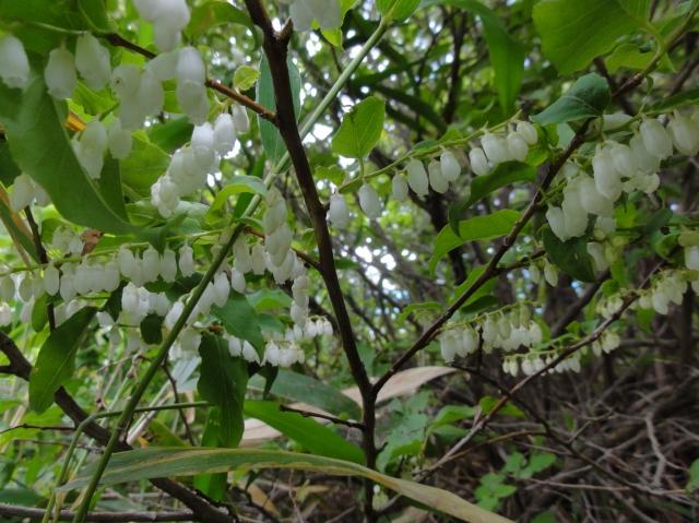 うみべの森を育てる会5月度植物調査_c0108460_21381579.jpg