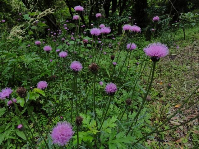 うみべの森を育てる会5月度植物調査_c0108460_21383642.jpg