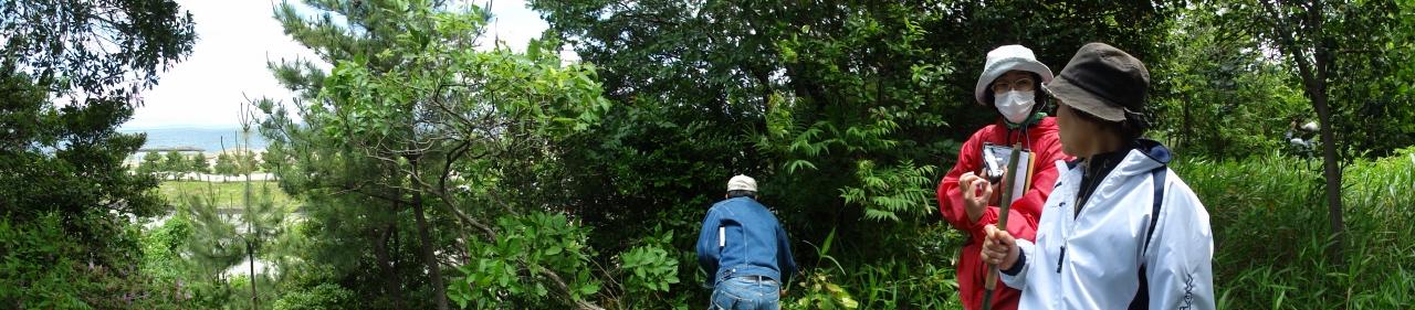 うみべの森を育てる会5月度植物調査_c0108460_21435255.jpg