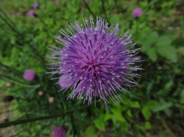 うみべの森を育てる会5月度植物調査_c0108460_21503961.jpg