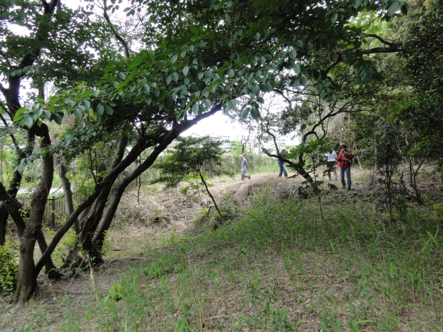 うみべの森を育てる会5月度植物調査_c0108460_21505847.jpg