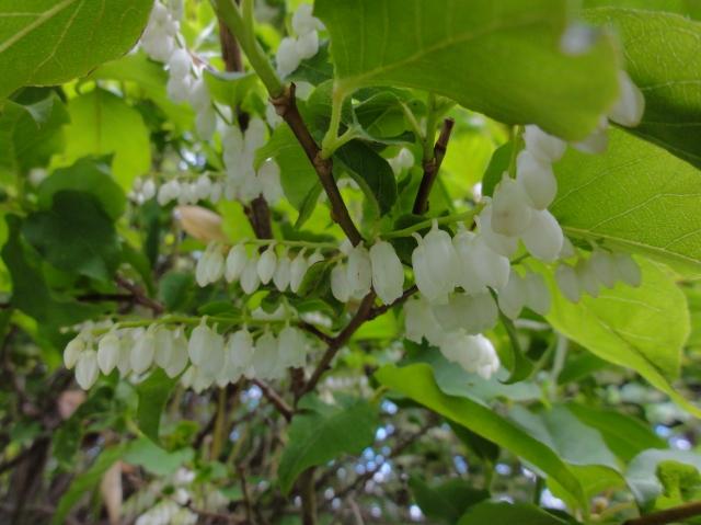 うみべの森を育てる会5月度植物調査_c0108460_2224464.jpg