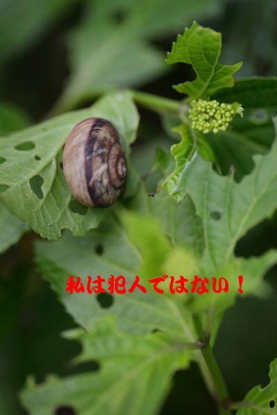 c0173670_11315133.jpg