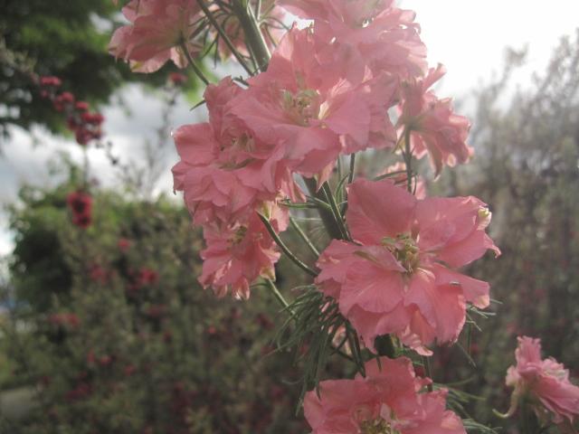 シマサルナシの花_e0181373_21201629.jpg