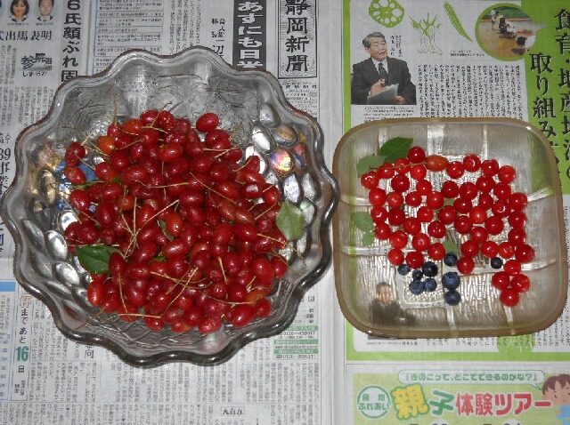 ビックリグミとユスラウメの収穫_f0018078_18272219.jpg