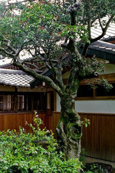 寺かふぇにて_c0150383_1993163.jpg