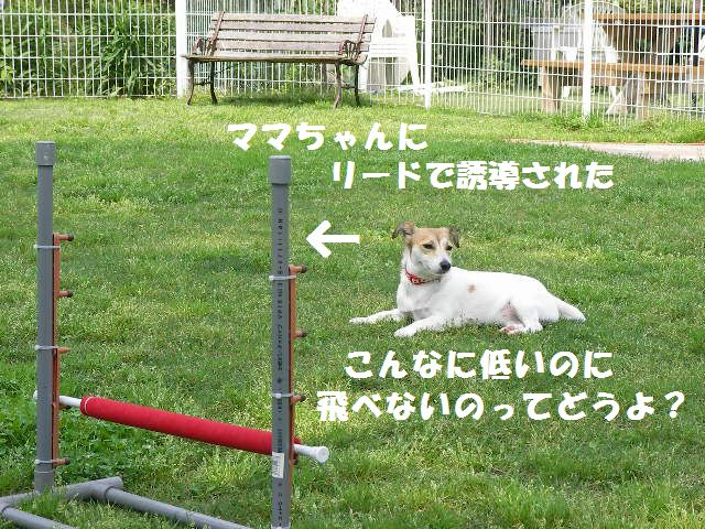 c0214384_1410287.jpg