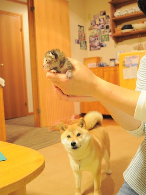小さな小さなつつじちゃん_a0126590_003264.jpg