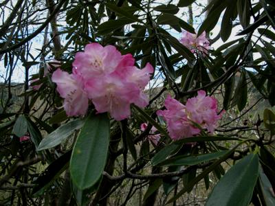 高峯神社 春の例大祭_e0120896_18523081.jpg