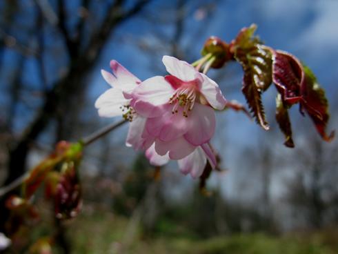 高峯神社 春の例大祭_e0120896_18593176.jpg