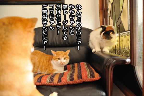 b0141397_12105988.jpg