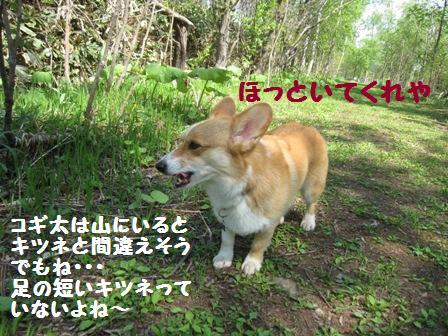f0212597_1163172.jpg