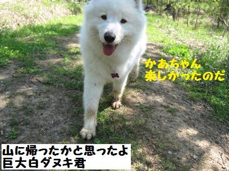 f0212597_1174881.jpg