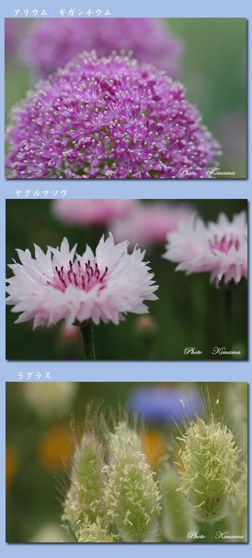 昭和記念公園の花_c0051105_0383680.jpg