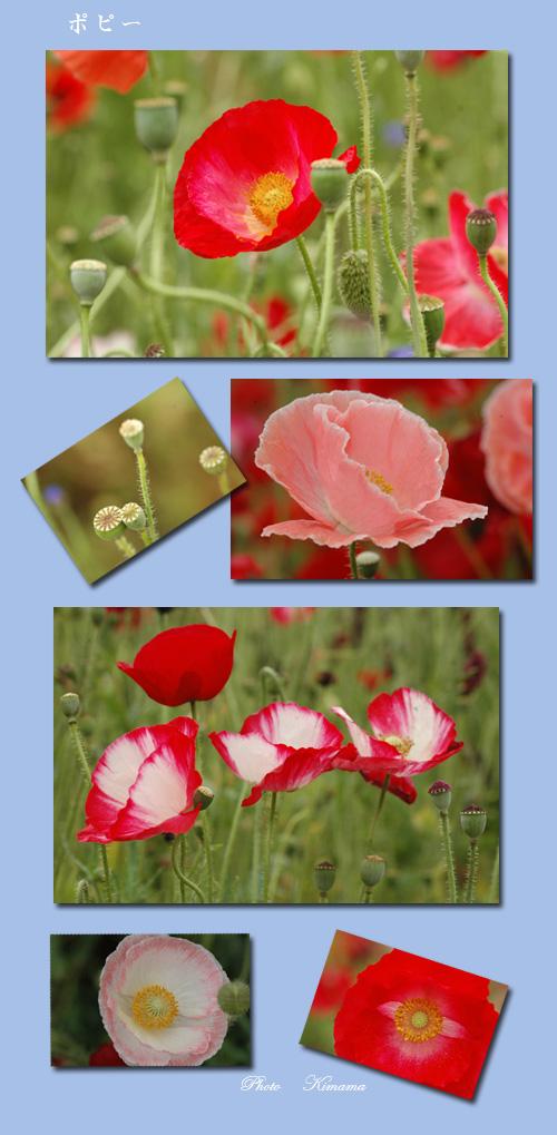 昭和記念公園の花_c0051105_038495.jpg