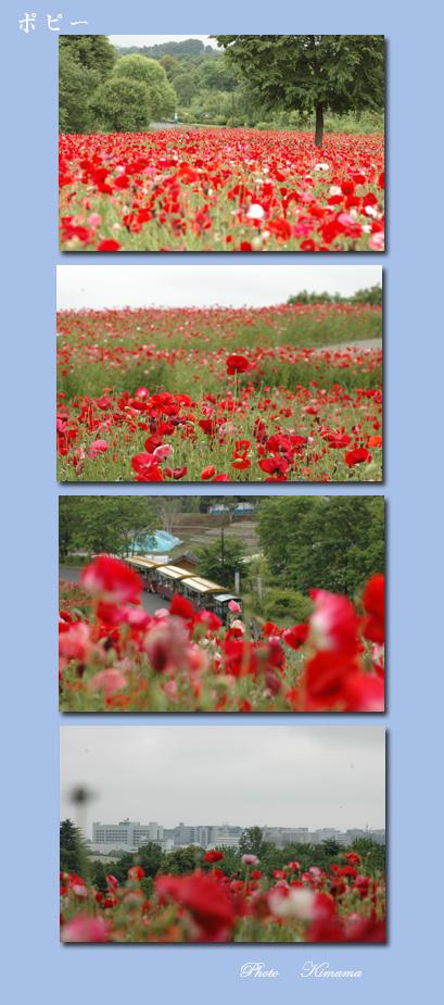 昭和記念公園の花_c0051105_039644.jpg