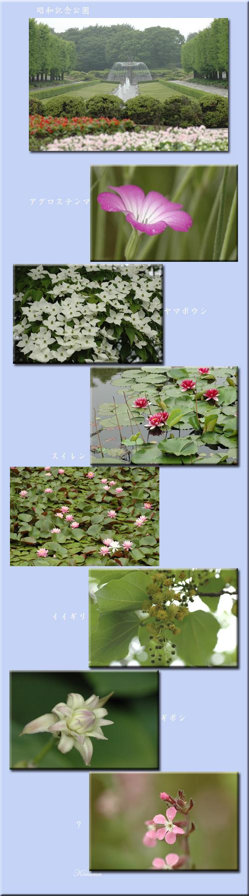 昭和記念公園の花_c0051105_11435513.jpg